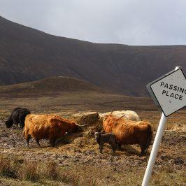 Whisky Reise Schottland 3.0 im Mai 2015 – Tag 1 – Ankunft und Umgebung Aberdeen