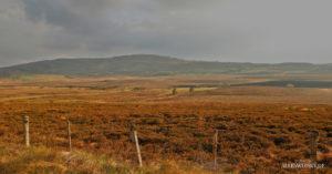 Schottland 2014 Dava Moorland