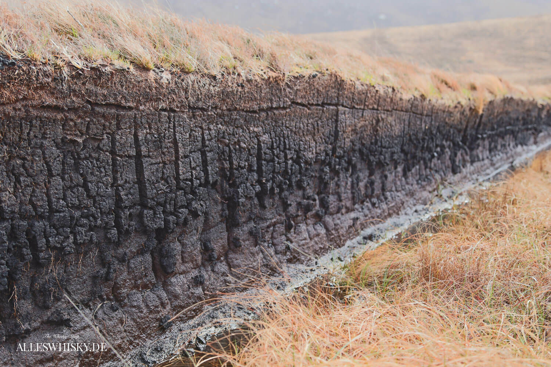 Torfschicht - Schnitt durch den Oberflächenbewuchs auf den Orkney Inseln im Mai 2015
