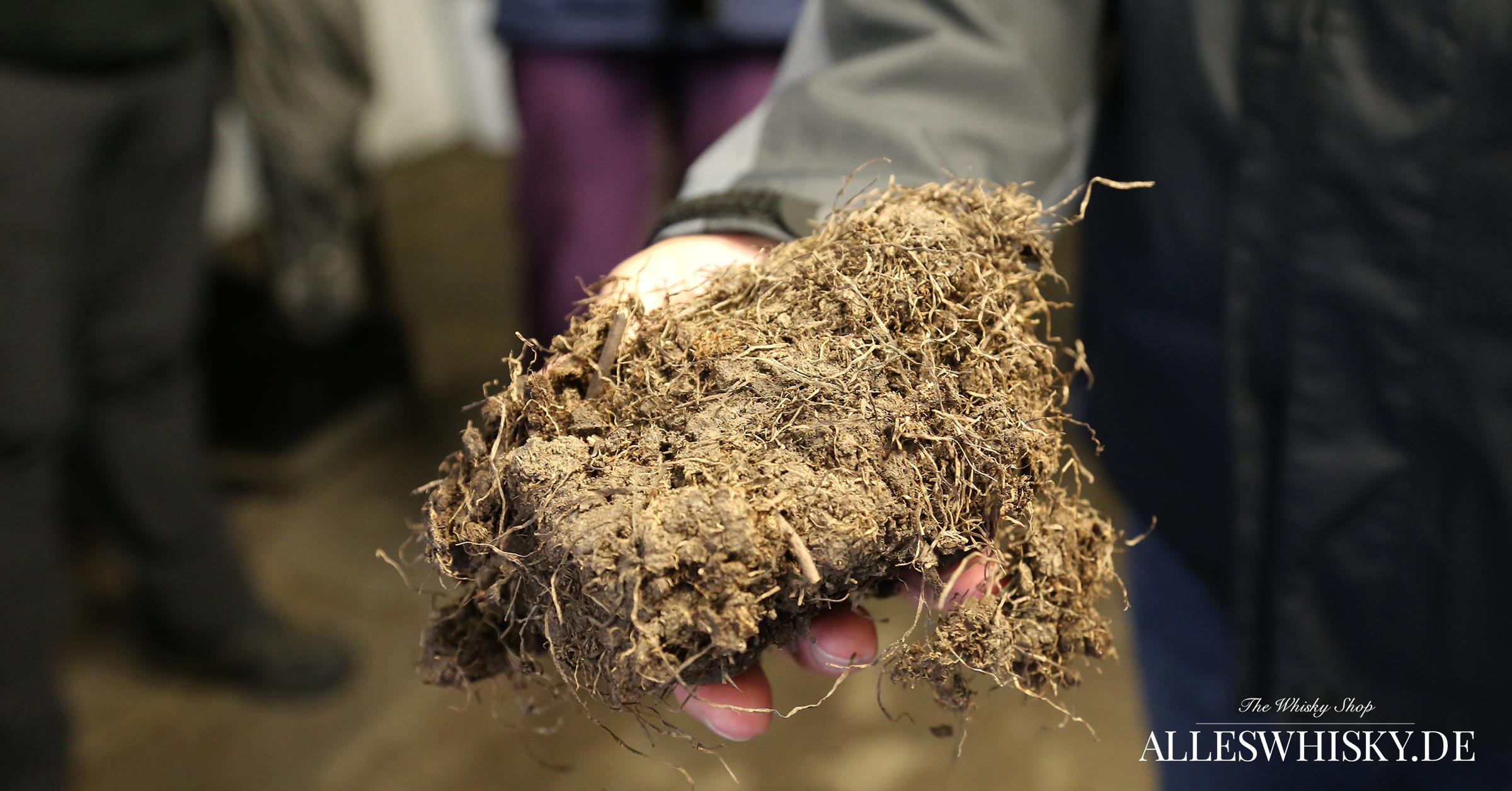 Highland Park - Ein getrocknetes Stück Torf aus dem Hobbister Moor mit vielen Wurzeln