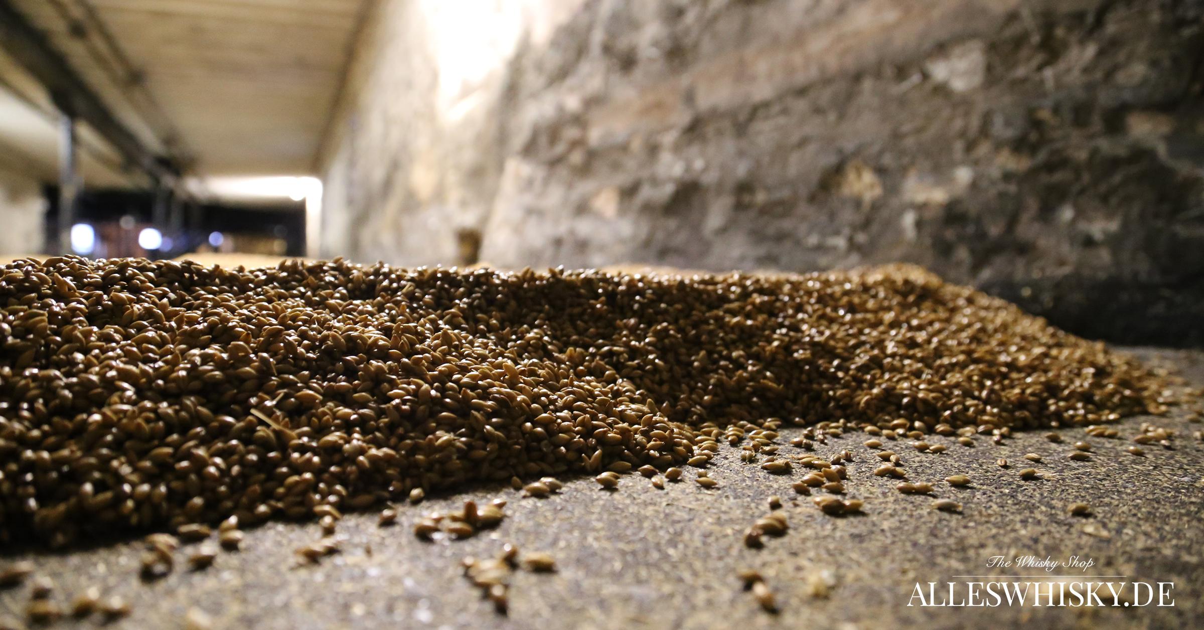 Highland Park - Floor Malting Böden - Ausgebrachte Gerstenschicht beim Keimen