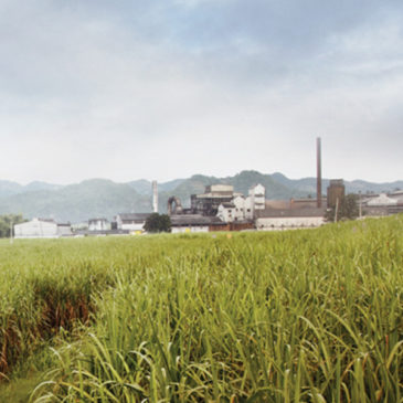 Wray & Nephew (Appleton) Rum Distillery (Jamaika) Brennerei Steckbrief
